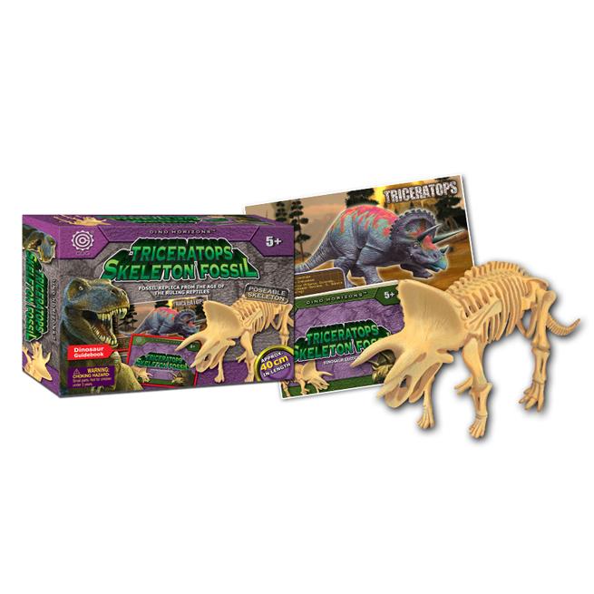 Triceratops Skeleton Fossil